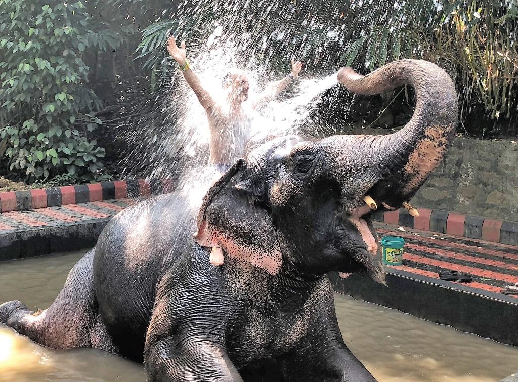 El Sur de la India en 10 días muy bien aprovechados