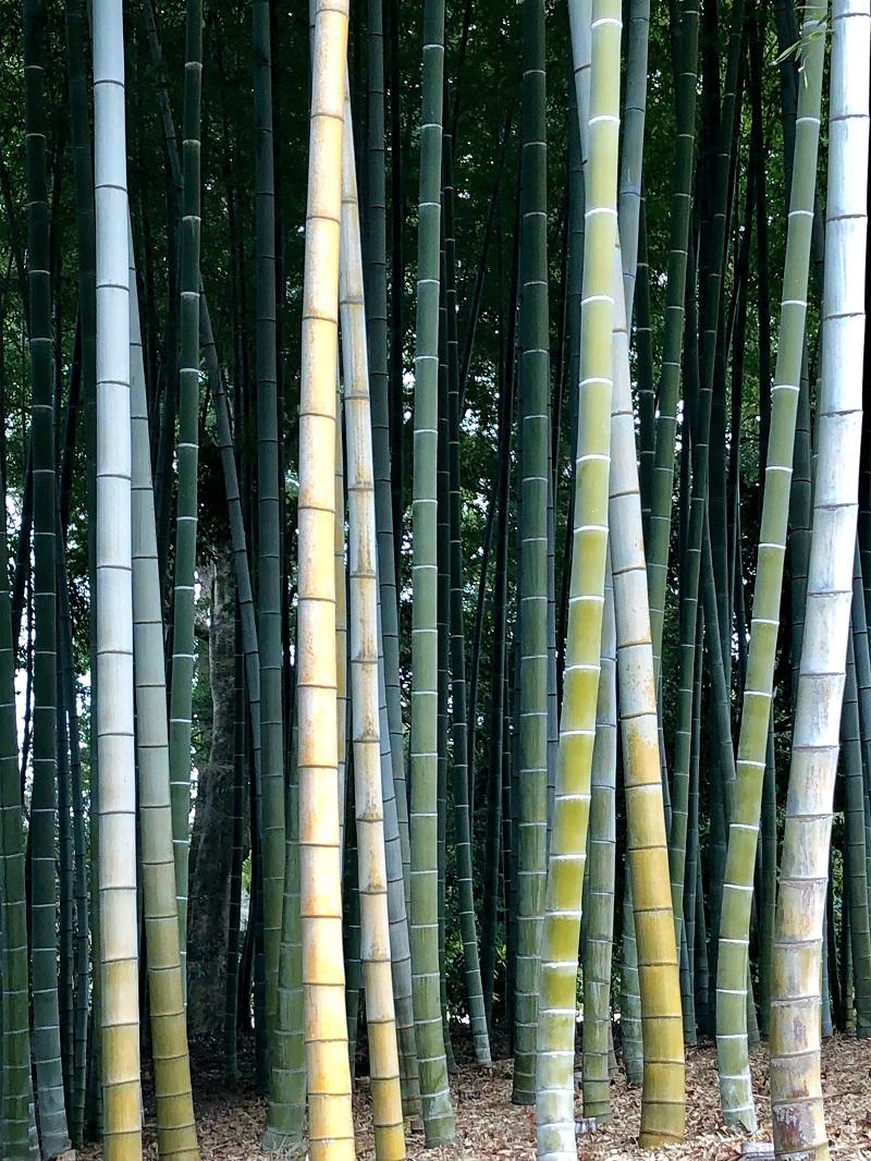 Japón, rincones escondidos   Mi Mundo Travel Planner