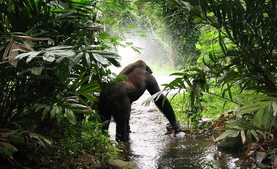 Uganda, espalda plateada | Mi Mundo Travel Planner